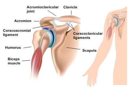acromioclavicular-joint